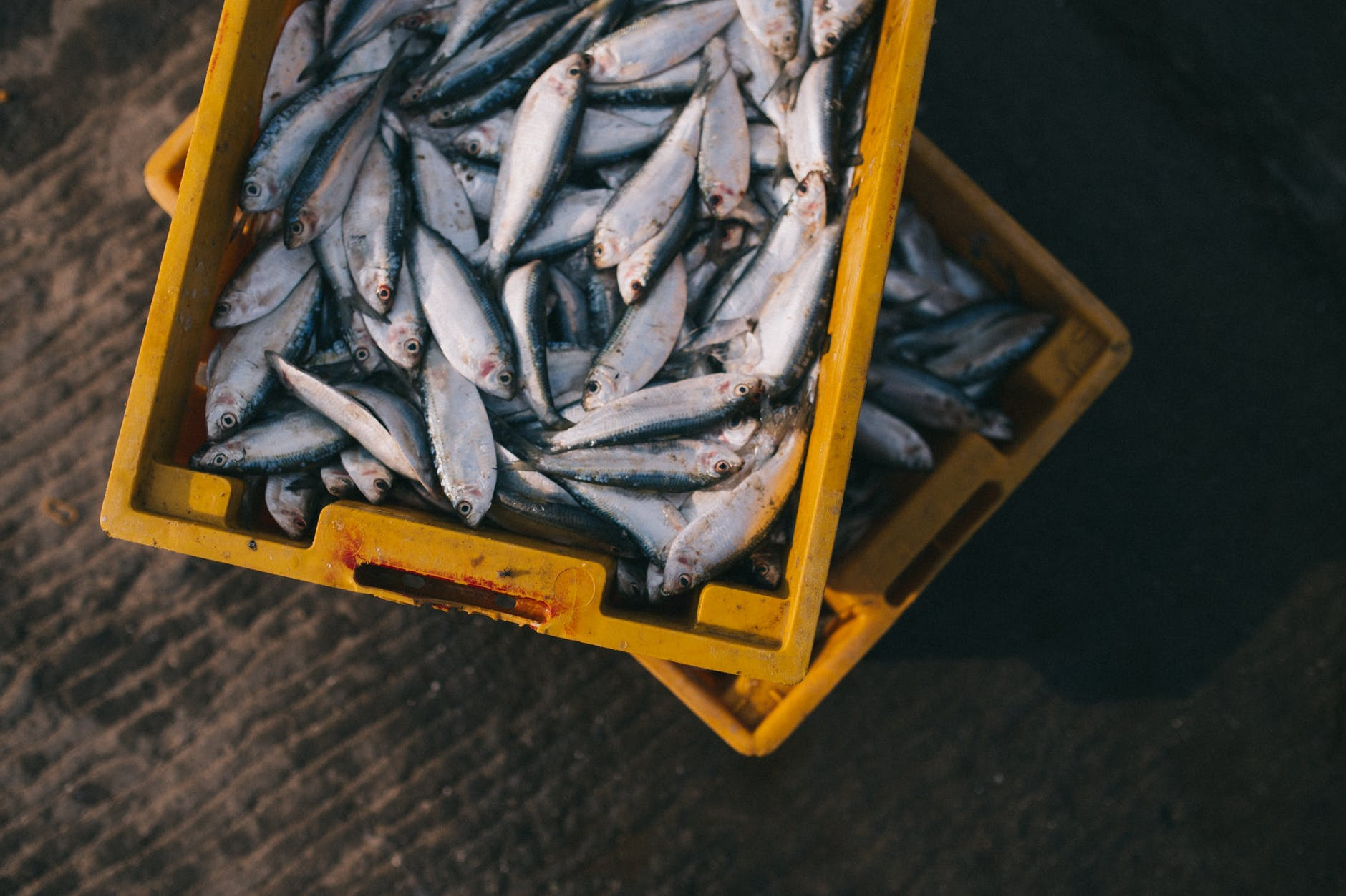blockchain-in-seafood-traceability